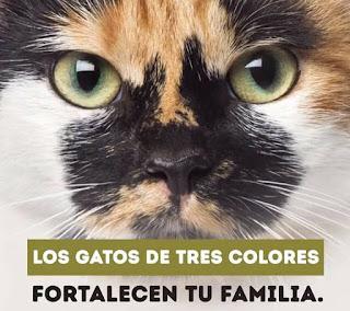 Los gatos de tres colores
