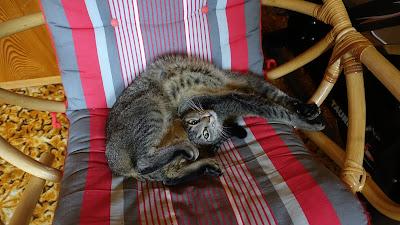 Faule, verdrehte Katze
