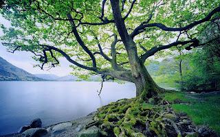 Materi 'Parts of Tree' (Bagian-Bagian Pohon) dan Soal Latihannya