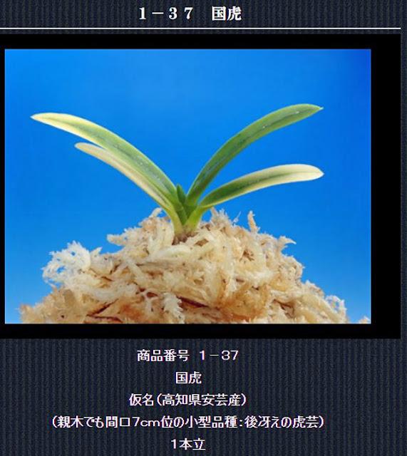 http://www.fuuran.jp/1-37.html