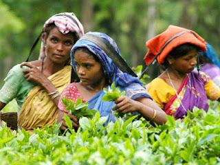 Tea garden workers