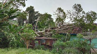 Pohon Tumbang Hantam Rumah Warga di Batu Brak