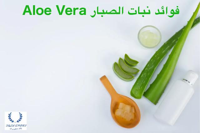 4 فوائد صحية لنبات الصبار Aloe vera