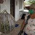 Agricultora colhe abóbora 'gigante' de 40kg