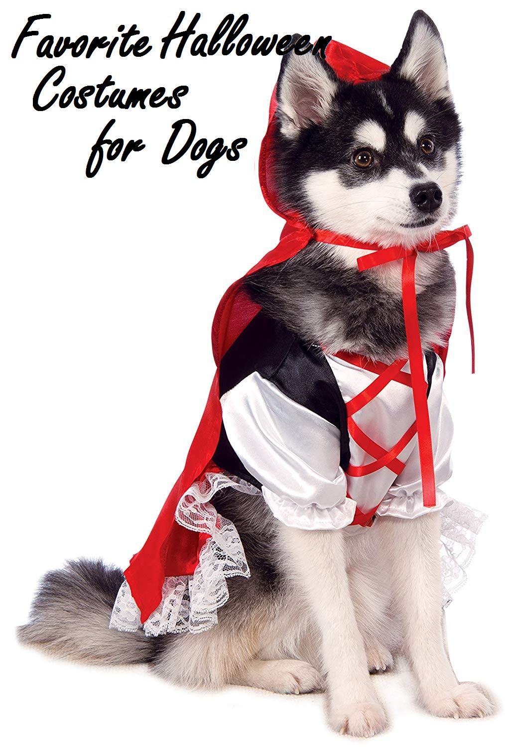 Favorite Halloween Costumes For Dogs