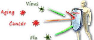 How to improve immunity naturally