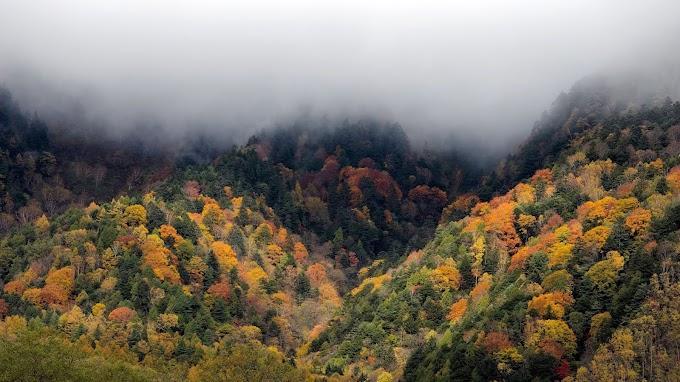 Paisagem Natural Nevoeiro na Floresta