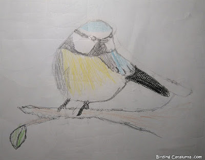 Dibuix de la mallerenga blava