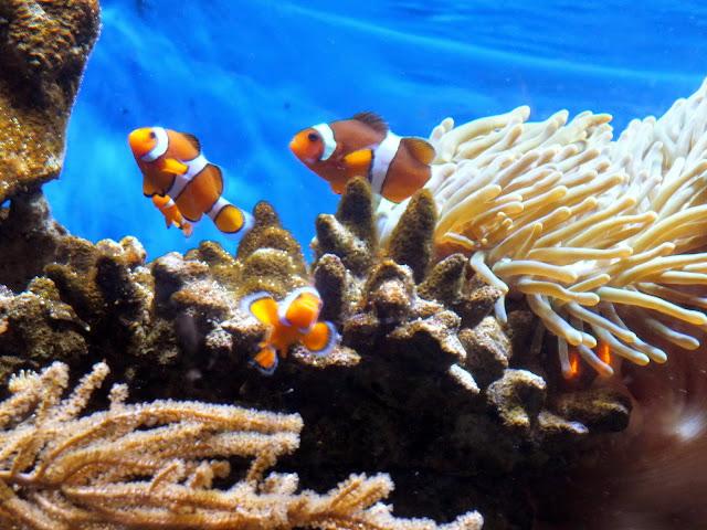 visitar el acuario de Barcelona