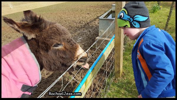 Cheeky Donkey