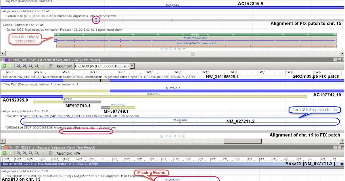 GenomeRef: New technique closes gaps in GRCm38 p6