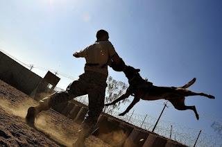 3 Destructive Ways That Hamper Your Dog's Training 1