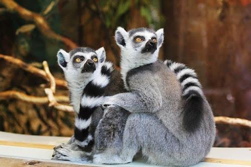 https://www.kinisayangerti.com/2020/07/siapakah-pendiri-kebun-binatang-yang-pertama.html