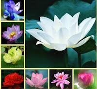 Top 10  loài hoa đẹp và dễ trồng nhất cho ngôi nhà của bạn (Hạt giống hoa đẹp, dễ gieo trồng chăm sóc) Phần 2