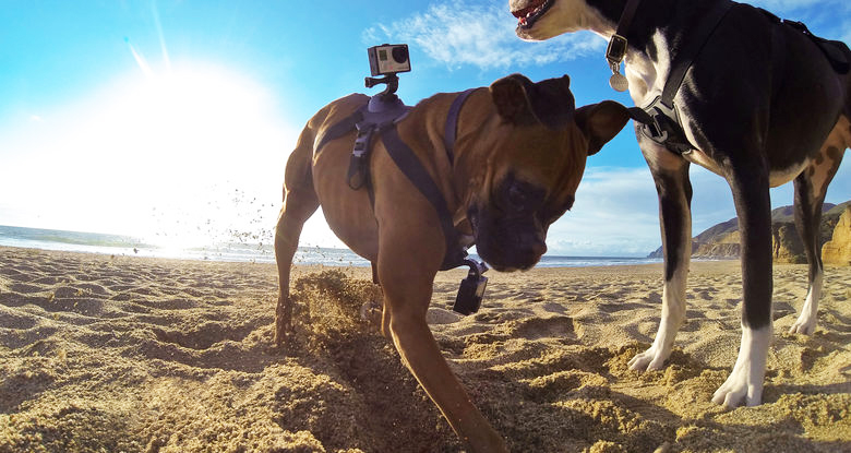GoPro-adjustable-dog-harness-pet-tech-accessory-for-dog-lovers