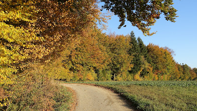 Farbiger Herbstwald beim Reckenberg