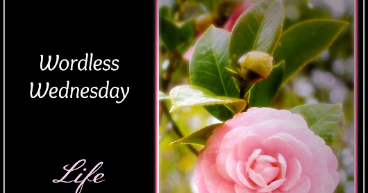 Wordless Wednesday, July 26 {with link up}