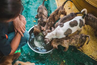 Rebatemango จับมือกับ มูลนิธิเพื่อสุนัขในซอย จัดแคมเปญระดมเงินบริจาคผ่านการช้อปปิ้งออนไลน์
