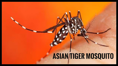 Mosquitoes-facts-in-tamil-all-about-mosquitoes