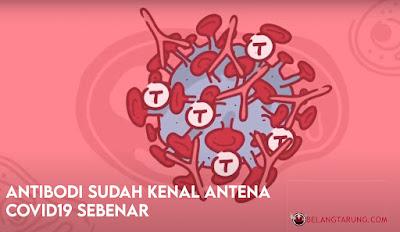Antibodi Tubuh Kenal Virus Covid Sebenar