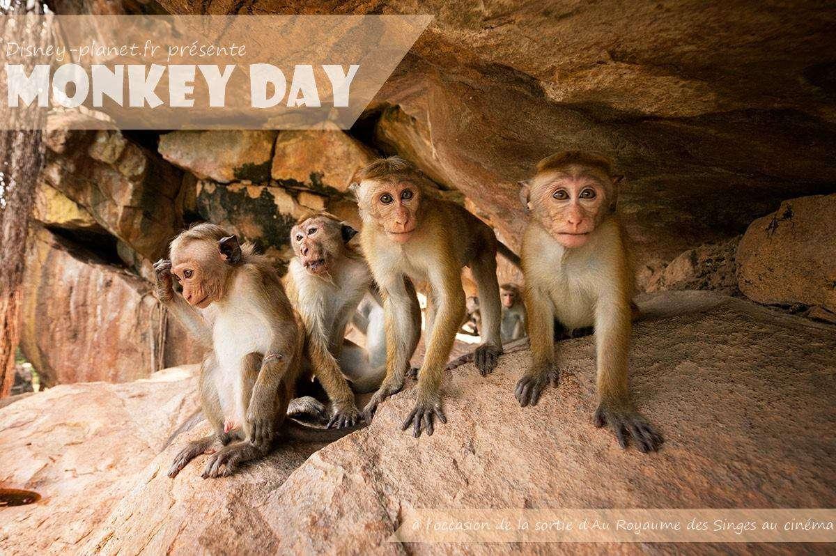 Monkey Day Wishes Pics