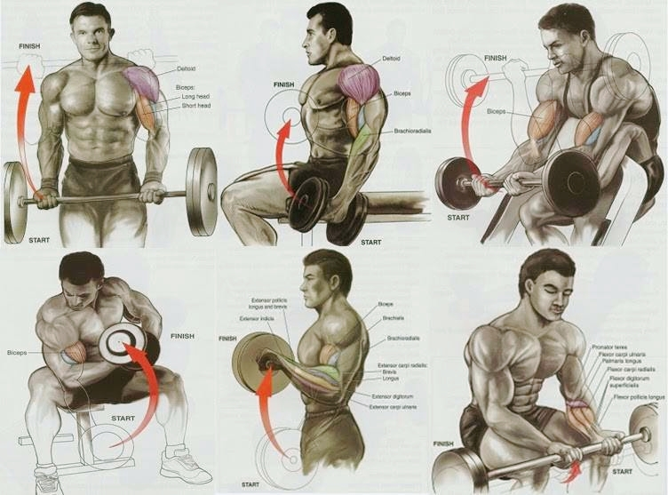 Biceps Workout at gym - 3 Bicep Exercises for Mass - World GYM