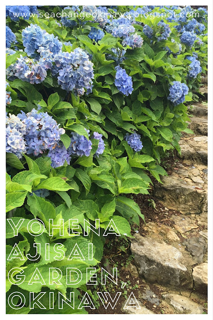 Yohena Ajisai (Hydrangea) garden contains over 10,000 hydrangea plants as far as the eye can see. It is easily accessible from route 84 not far past Pineapple Park.