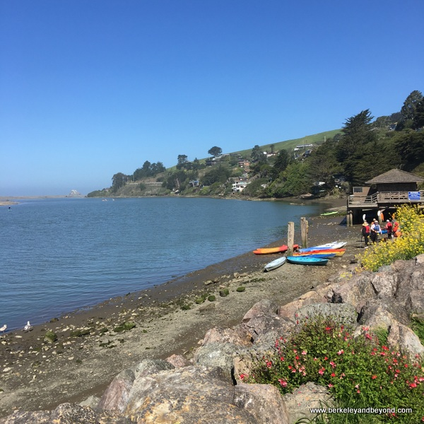 view of WaterTreks EcoTours kayak group putting in to the Russian River at Cafe Aquatica in Jenner, California