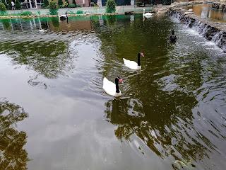 Мелітополь. Парк ім. Горького. Водойма з лебедями