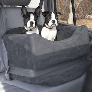 paradouro para cães com cinto de segurança