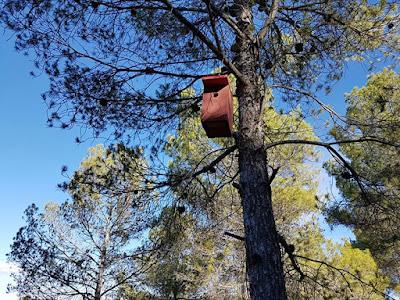 Caja nido para páridos