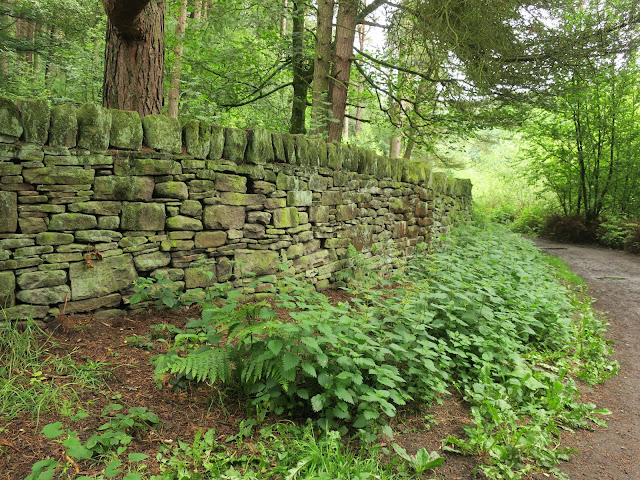 Dry stone wall and nettles by Ogden Water, West Yorkshire. 26th June 2019