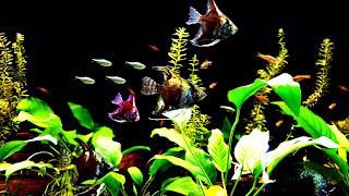 Beautiful Community Fish Tank 4K Wallpaper