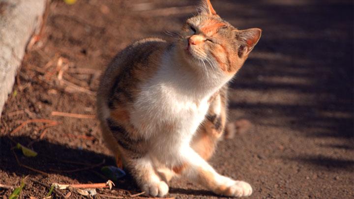 parasites in cats poop