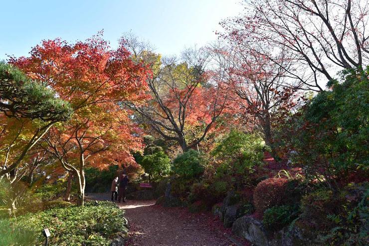桜山公園の紅葉4