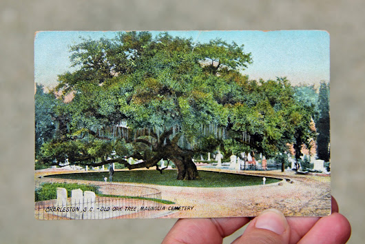 The Great, Grandfather Oak of Magnolia Cemetery