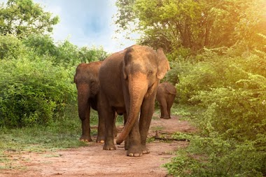 Half day safari tour at udawalawe national park