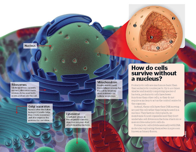 Inside a Nucleus