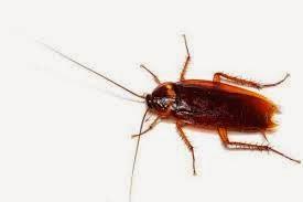 Cucarachas-como-proteger-su-hogar