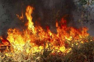 «Αναδασωτέα και εκτός ΟΠΕΚΕΠΕ όποια έκταση καεί»