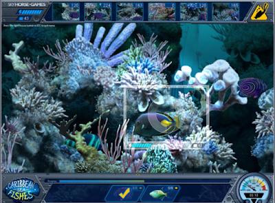 加勒比海之魚,很特別的模擬水下攝影師拍攝海底世界!