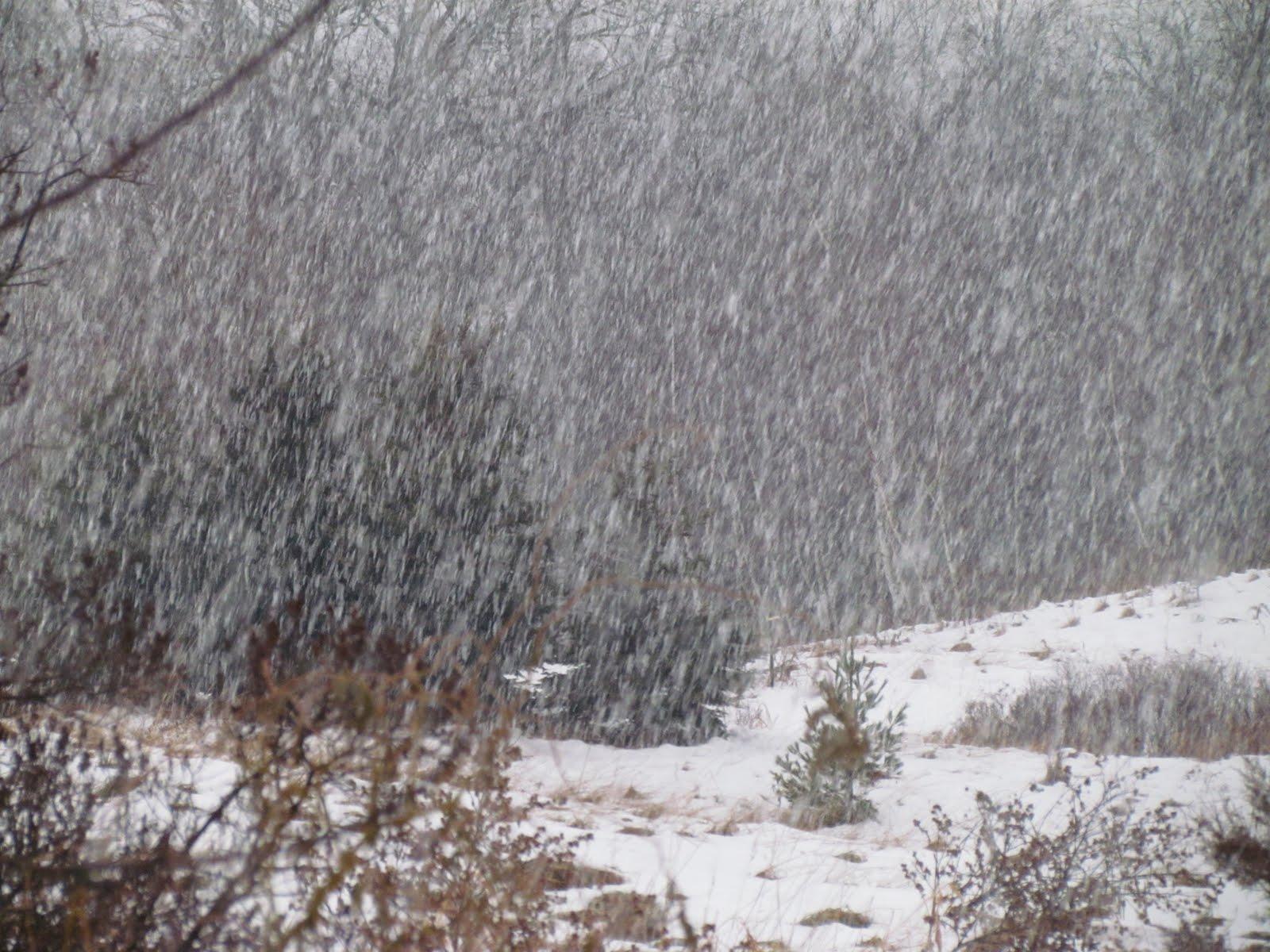 Pauca Verba Lenten Mercy Meditation Like The Rain And Snow