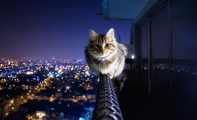 background cat wallpaper