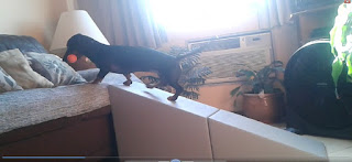 rampa para cães com coluna