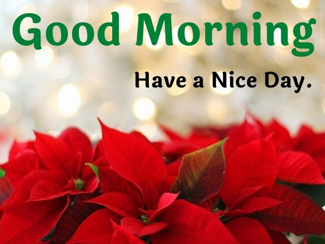 Good Morning Flowers Images free download for whatsapp