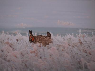 bird dogs and bird hunting abirdhuntersthoughts.com