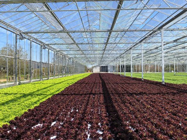 الزراعة في هولندا في تطور مستمر