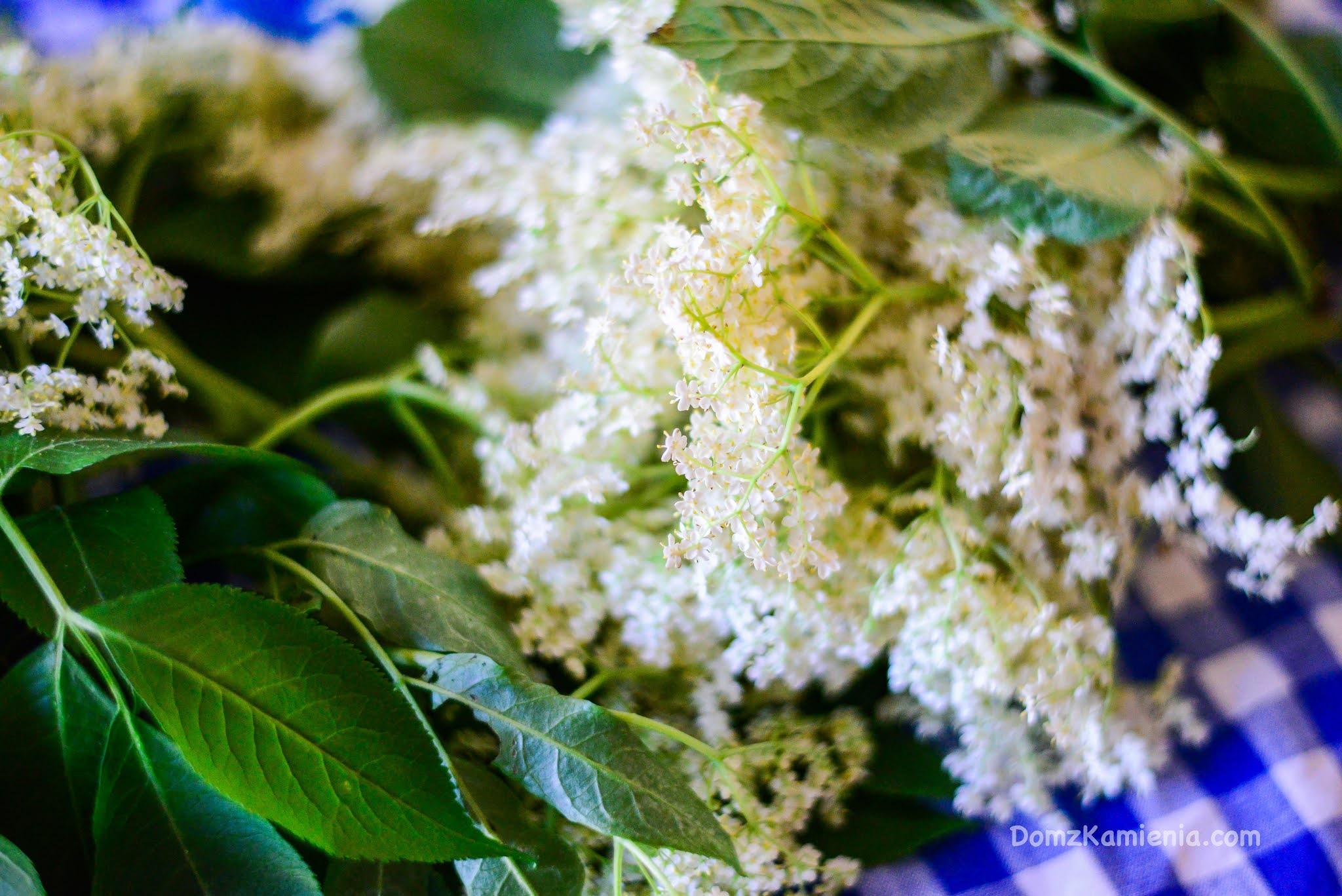 Syrop z kwiatów dzikiego bzu - Dom z Kamienia blog