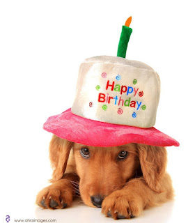 Happy birthday with dog pictures