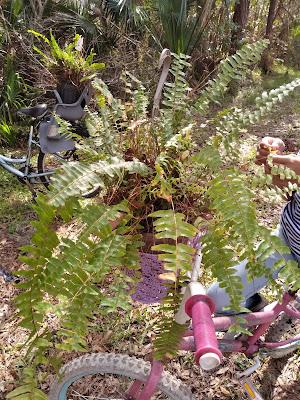ferns in a bike basket